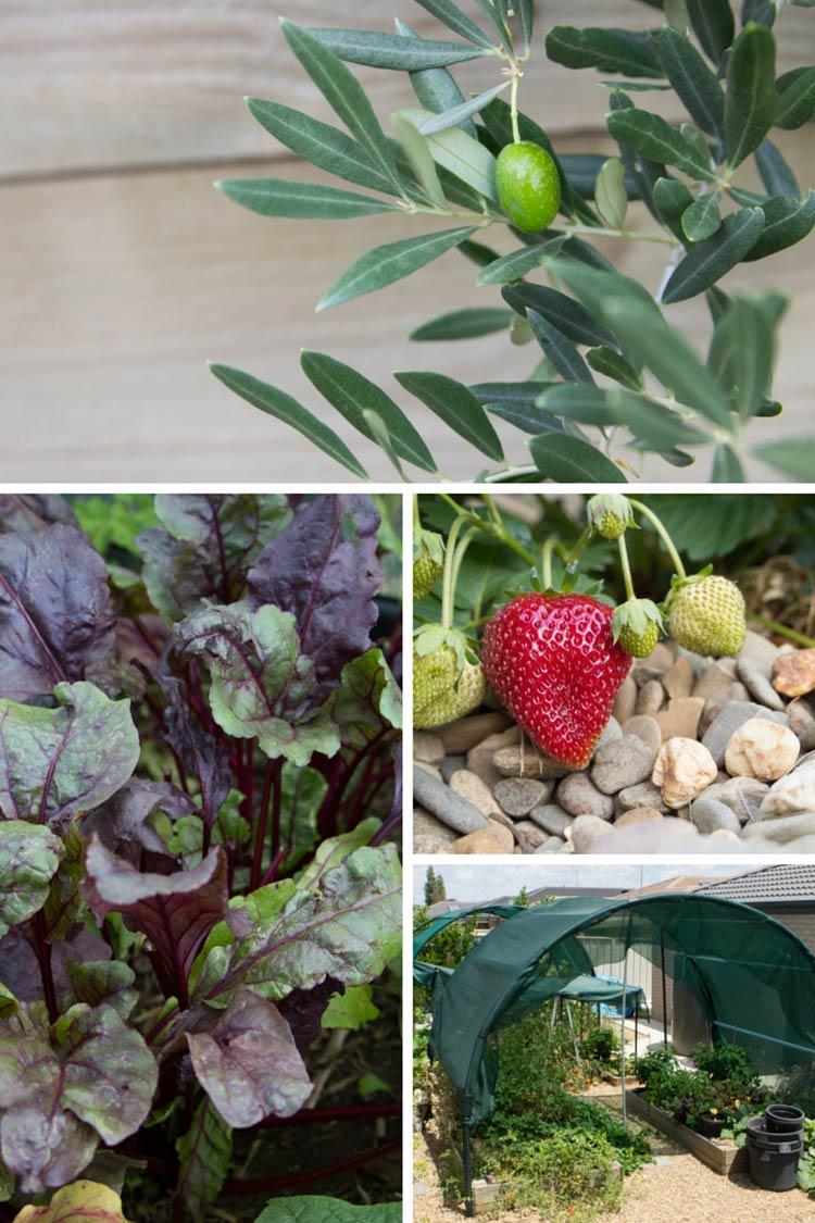 kys veggie garden