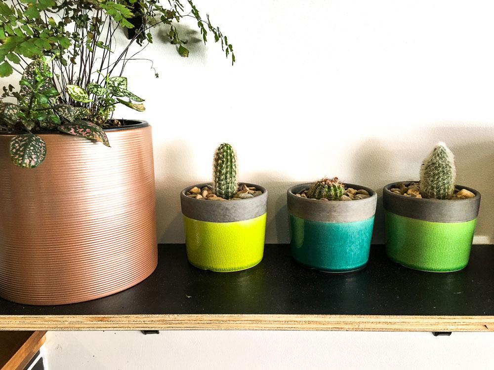 blue-jam-interior-small-pots